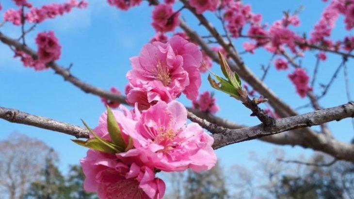 春のイベントお花見